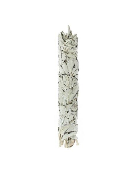 Salvia Blanca de California Tierra Zen - 12 cm.