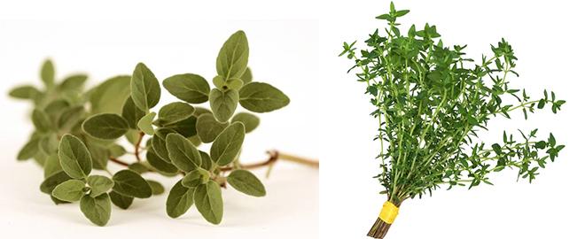Plantas de orégano y tomillo